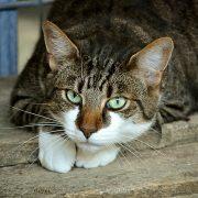 curiosità dal mondo sui gatti